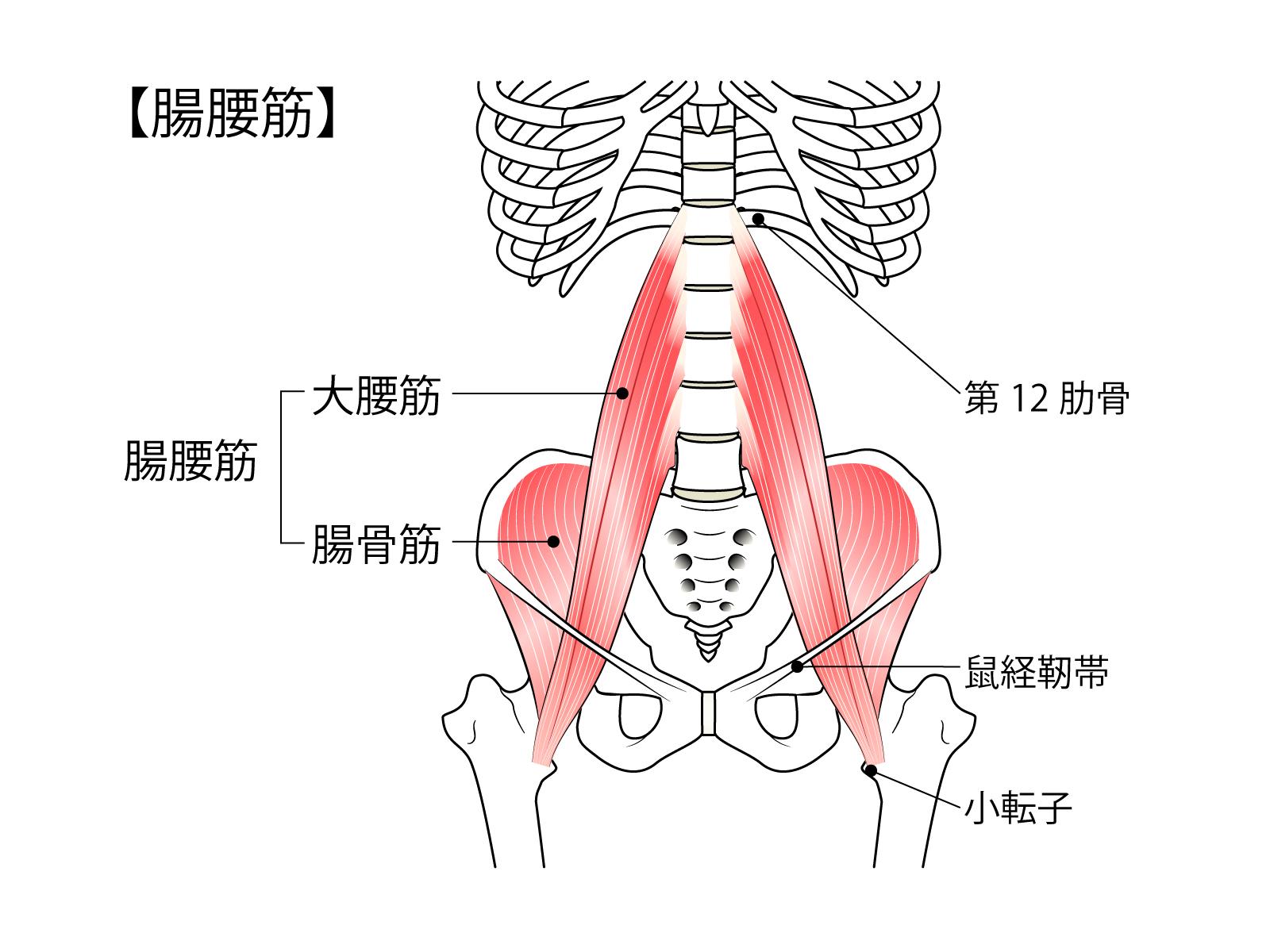 腰痛を悪化させないためにストレッチを行おう!奈良県生駒市えだ鍼灸整骨院・整体院